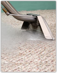 expert carpet steam cleaners